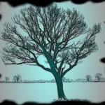 алгоритм покрывающего дерева